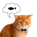 Cat Dreaming roja en la comida sabrosa aislada imágenes de archivo libres de regalías