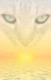 Cat Dreams. A fantasy image with sunset and cat face vector illustration