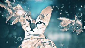 Cat Dreams. Floating fish and bubbles vector illustration