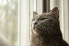 Cat dreams Royalty Free Stock Image