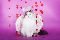 Cat in a dress of angel Royalty Free Stock Image