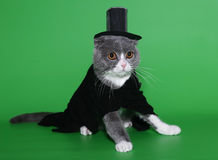 Cat in a dress coat and a hat. Cat in a dress coat and a hat on a green background Stock Image