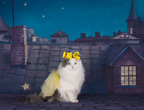 Cat in a dress and a wreath of tsetov on the roof at night Royalty Free Stock Image