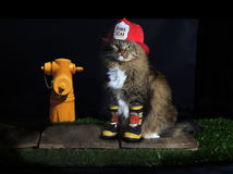 Cat Dressed als Brandweerman Royalty-vrije Stock Foto's