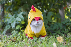 Cat dressed as a chicken in the garden Royalty Free Stock Image