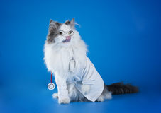 Dr. cat Royalty Free Stock Images