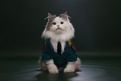 Cat dressed as General. Cat in a suit on an isolated background of general Royalty Free Stock Photos