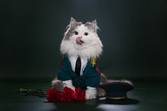 Cat dressed as General. Cat in a suit on an isolated background of general Royalty Free Stock Photo