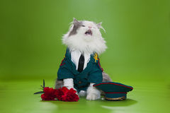 Cat dressed as General. Cat in a suit on an isolated background of general Stock Photos