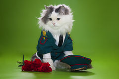 Cat dressed as General. Cat in a suit on an isolated background of general Royalty Free Stock Photography