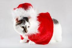 Cat dressed as Santa Claus. White cat with dark spots dressed as Santa Claus Royalty Free Stock Photos