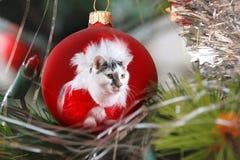 Cat dressed as Santa Claus. White cat with dark spots dressed as Santa Claus Stock Photography