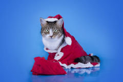Cat dressed as Santa Claus in the winter forest Royalty Free Stock Photos