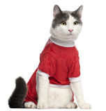 Cat dressed in red sitting in front of white Royalty Free Stock Images