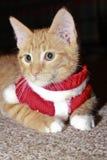 Cat Dressed Up para la Navidad, gato de la Navidad Foto de archivo libre de regalías