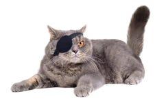 Cat dressing in pirate costume. British cat dressing in caribbean pirate costume with eye patch royalty free stock image