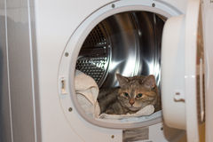 Cat in the drier Stock Photos