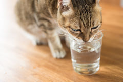 Cat drink water Stock Photo