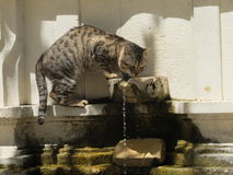 Cat drinking from the fountain Stock Image