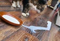 Cat drinking  milk. Adult  cat drinking saucer full of milk Stock Photo