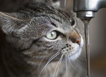 Cat drinking water Stock Photos
