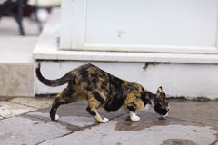 Cat drinking water from puddle Royalty Free Stock Photography