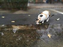 Cat drinking water Stock Photo