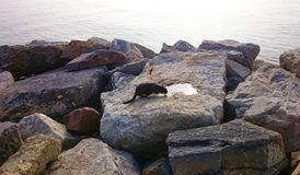 Cat is drinking water on the stones and sea background Royalty Free Stock Photo