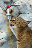 Cat drinking water. On the stream of water Stock Images