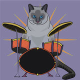 Cat drummer Royalty Free Stock Image