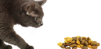 Cat and dry food stock photography
