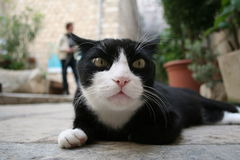 Cat in dubrovnik. A black and white cat in a street of old town dubrovnik Stock Photo