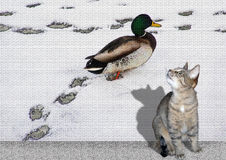 Cat and duck Royalty Free Stock Photos
