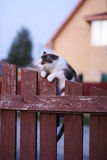 The cat dug her claws into the fence and strained. Royalty Free Stock Photography
