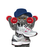 Cat with dumbbells playing sports -- running and jogging Royalty Free Stock Photography