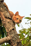 Cat on durian tree Royalty Free Stock Photography