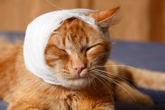 Cat ear ache with bandage Royalty Free Stock Photos