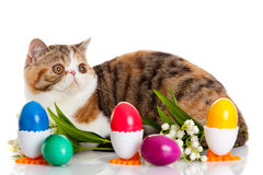 Cat with easter coloured eggs isolated on background Stock Photo
