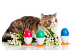 Cat with easter coloured eggs isolated on background Stock Photos