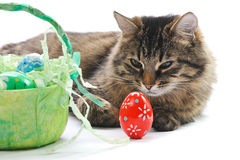 Cat and easter eggs Royalty Free Stock Images