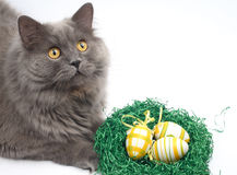 Cat and easter eggs Stock Photography