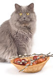 Cat and easter eggs Stock Image