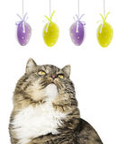 Cat and easter eggs, isolated Stock Images