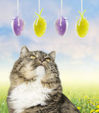 Cat and easter eggs on spring meadow Royalty Free Stock Photography