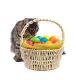 Cat and easter eggs Stock Photo