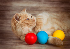 Cat before Easter Stock Photos