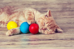 Cat before Easter Royalty Free Stock Photography