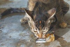 Cat eat fish. stock photos