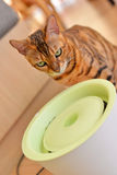 Cat eat water Stock Photos