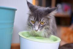 Cat eat water Stock Images